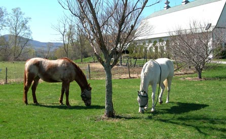Two of the horses that live at Taraden.